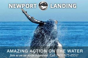 Newport landing whale watching costa mesa